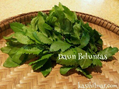daun beluntas untuk menghilangkan bau badan